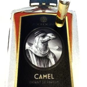 camel edgy